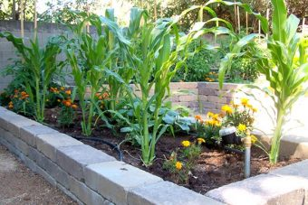 "VIDEO: Long-term success of local ""Read & Feed"" Garden"