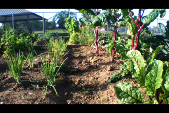 """Growing Together School Garden Initiative"" Helps Academics to Grow"