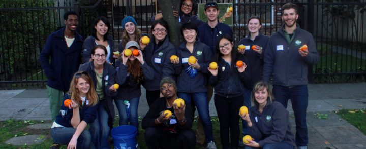 Harvest Sacramento collects fruit from across the city