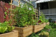 Free Gardens Now Available For BHC Residents
