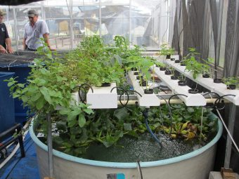 CSUS Assisting Communities With Aquaponics