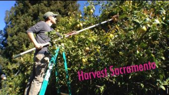 VIDEO: Harvest Sacramento ft. Dominic Allamano Interview