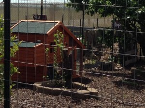 This is a home for the chickens an elementary schools' garden club is going to receive.