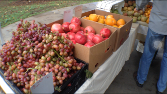 VIDEO: Last Oak Park Farmer's Market Of The Season