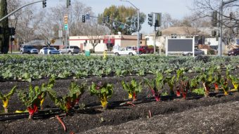 Urban Agriculture On The Rise In Sacramento